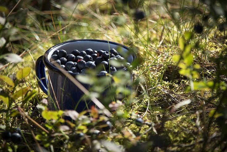 Ravanti Events, Blueberries | by visitsouthcoastfinland #visitsouthcoastfinland #Finland #berries #marjat #outdoor #ravantievents #blueberries