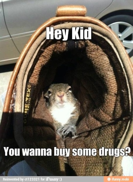 Extreme Humor 12 Of The Prettiest Women From The 80 S: 17 Best Images About Funny Squirrels On Pinterest