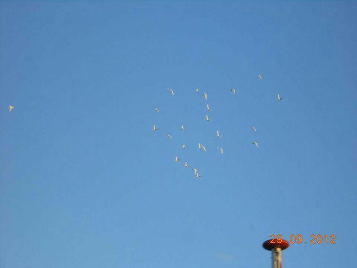 Vrijheids duiven