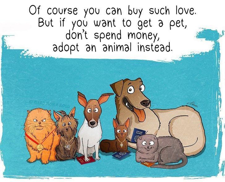 The Importance And Beauty Of Adopting Second Hand Dogs 12 Images In 2020 Shelter Dogs Shelter Dog Quotes Animal Shelter Quotes