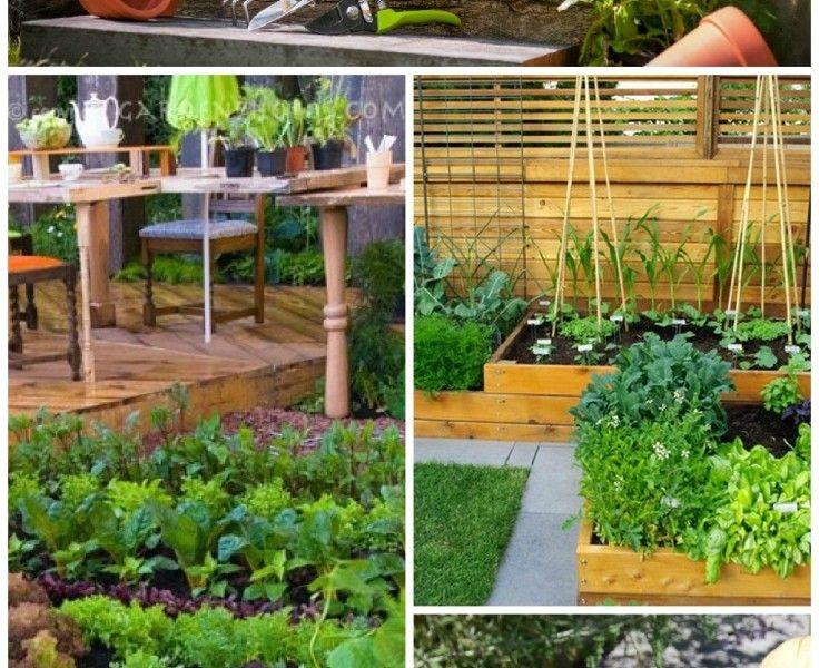 TOP+10+Tips+on+Starting+Your+Own+Vegetable+Garden