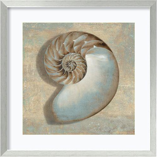 Aqua Nautilus by Caroline Kelly: 26.88 x 26.88 Print Reproduction