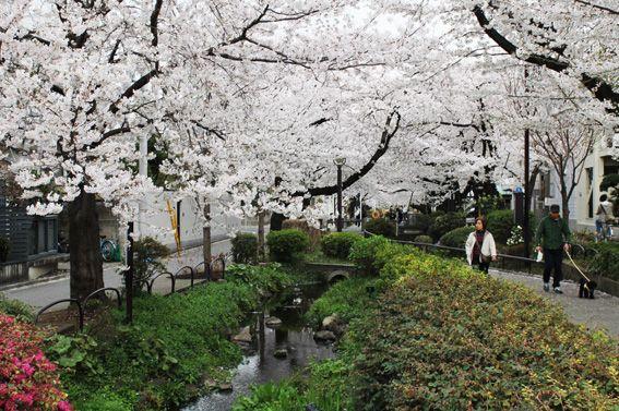 Daizawa nature walk  Shimokitazawa