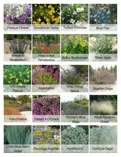 Mostly utah native, ultra low water plants, organized in order of bloom time, for your rock garden or xeriscape