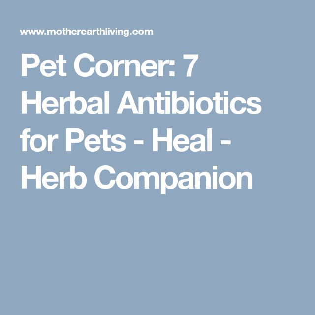 Pet Corner: 7 Herbal Antibiotics for Pets - Heal - Herb Companion