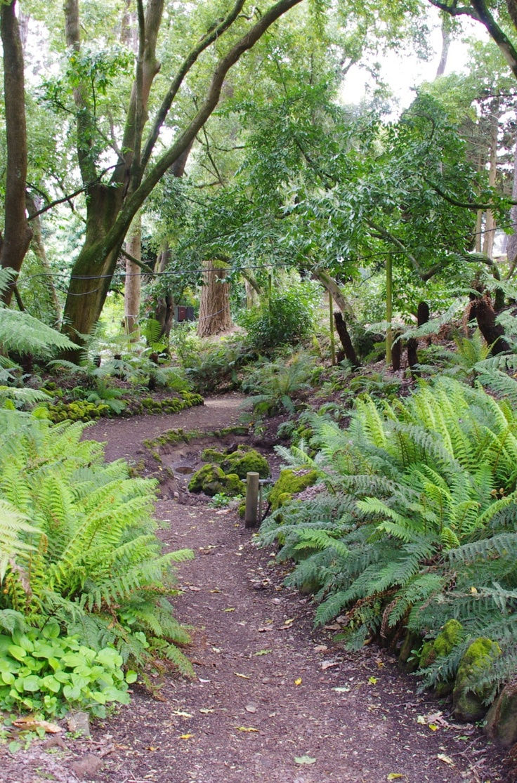 The fernery in the Wombat Hill Botanical Garden in Dayllesford is a 'must see' place. It is so lush and relaxing. The 'gardens' are celebrating their 150th birthday next year, walking around the garden is so special the trees are so huge and many of them are rare and majestic.