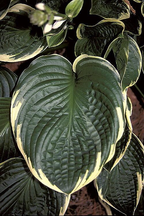 281 Best Images About Plants We Work With On Pinterest