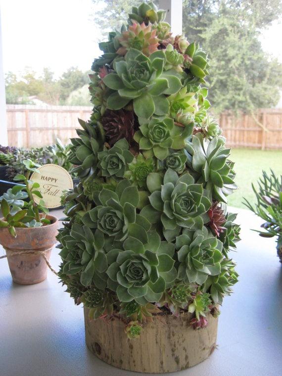 Succulent Tree For The Basement Christmas Pinterest