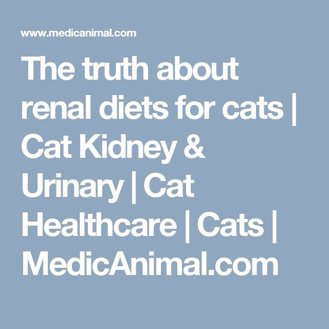 The truth about renal diets for cats | Cat Kidney & Urinary | Cat Healthcare | Cats | MedicAnimal.com