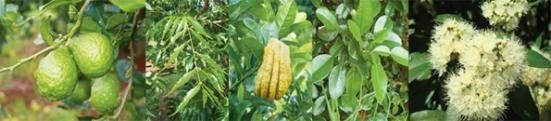 Bush Tucker - Chillingham Bush Tucker Farm and Banana Cabana