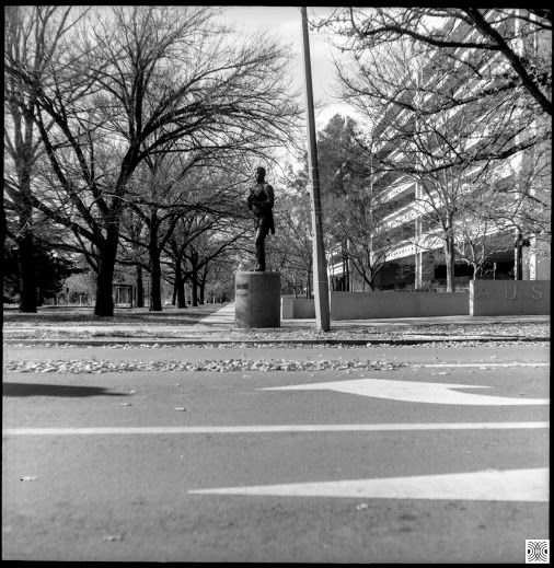 My Canberra - on film mainly Barton, Kings Ave, back in 2015  Flexaret, Kodak T-Max 100  www.pavelvrzala.com  #Australia #Canberra #Barton #KingsAve #tree #street #statue #public #space #city #Kodak #TMax100 #film #Flexaret #blackandwhite