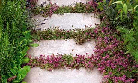 Creeping thyme. Plants in crevices soften lines and stop paths resembling concrete deserts.  Photograph: GAP