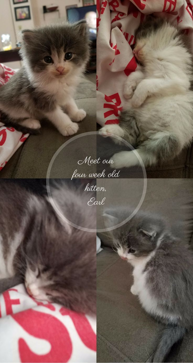 Meet Our 4 Week Old Kitten Earl And Some Tips For Caring For A Young Kitten Kittens Dustinnikki Mommy Of Three Kitten Care Kitten Cat Care