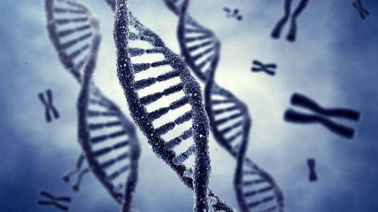 Kutatóknak sikerült szekvenálniuk egy részét annak az emberi DNS mintának, amelyet egy 430 ezer éve élt elődünk fogaiból és combcsontjából sikerült kinyerni. Észak-Spanyolországban megtalált maradványok a legrégebbi DNS-t szolgáltatták, ez átrajzolhatja az emberi faj evolúciós fáját.