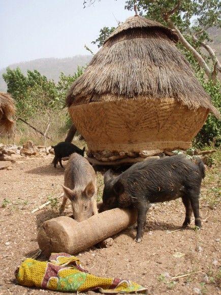 Bij de schuurtjes van de Tata 's (kleine kasteeltjes die op de werelderfgoed lijst staan) in het noord oosten van Togo