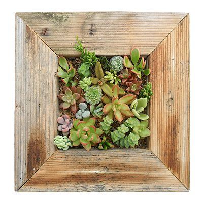 SUCCULENT WALL PLANTER KIT: The kit comes complete with the frame, a wire mesh, and water-absorbing moss, as well as instructions that show how to get the succulents to actually stay in the frame on the wall.