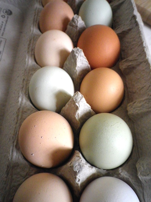 ... images about EGGS on Pinterest | Emu, Chicken eggs and Egg art