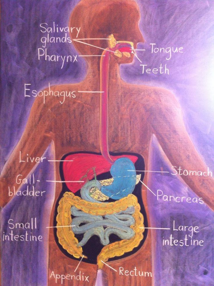 47 best 7: Human Biology images on Pinterest | Anatomy, High school ...