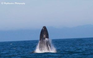 Wonderful Humpbacks