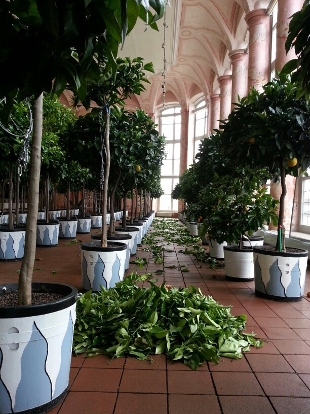 48 best images about orangerie ma cherie on pinterest planters greenhouses and side yards. Black Bedroom Furniture Sets. Home Design Ideas