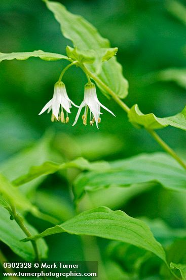 27 best native plants for the northwest images on pinterest