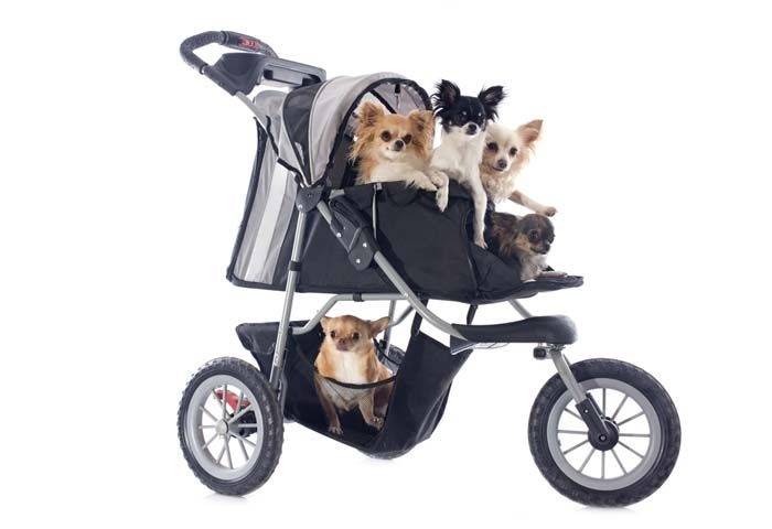 There are times when dog owners prefer to use pet strollers for dogs when going to a park, or for a jog, or to the beach, or anywhere else. Nobody needs an excuse to have a stroller for dogs, but now the question is, what are the best dog strollers or carriages that work well with pets? #dogs #pets #strollers #petstroller #dogstroller
