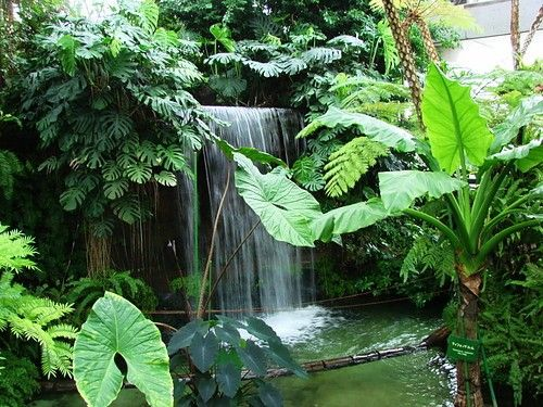 Tropical Garden Ideas Uk 2389 best park tropical images on pinterest | tropical garden