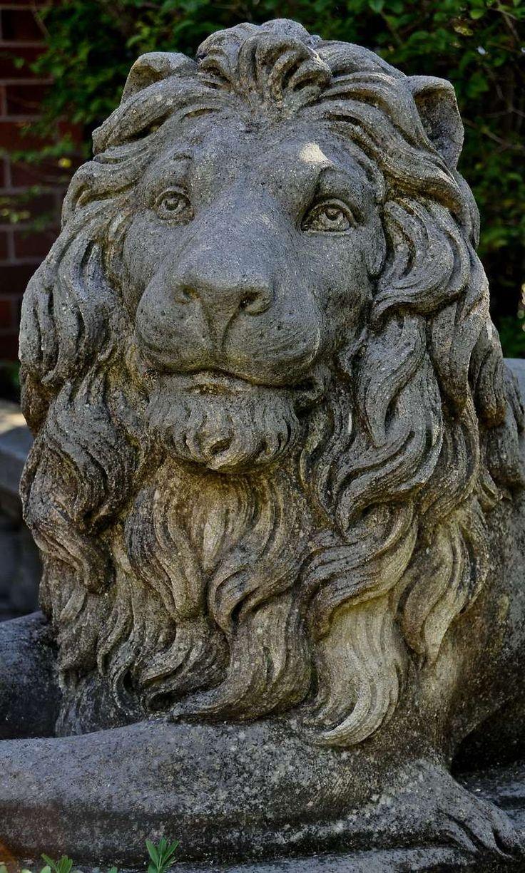 Images about leeuwen koppen on pinterest