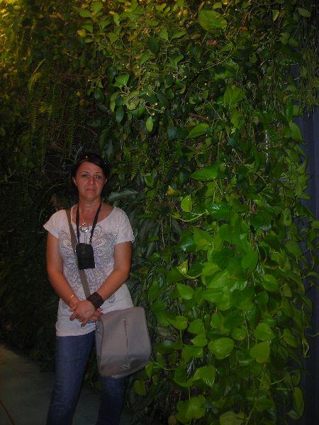 Egy függőleges kerttel bárki oázist varázsolhat a városi környezetbe.  http://www.globalgarden.hu/szolgaltatasaink/fuggoleges-kertek-zold-falak/