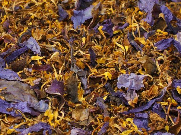 Голубой лотос (Nymphaea caerulea) (лепестки цветов)