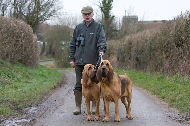 A Complete Guide On All K 9 Police Dog Breeds Big Dog Breeds Dog Breeds Police Dog Breeds