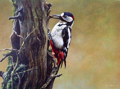 Original British Bird Paintings - Alan M Hunt Wildlife Artist UK