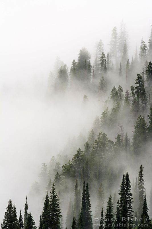 Cloud forest, Glacier National Park, Montana USA / Click image to purchase a print or license