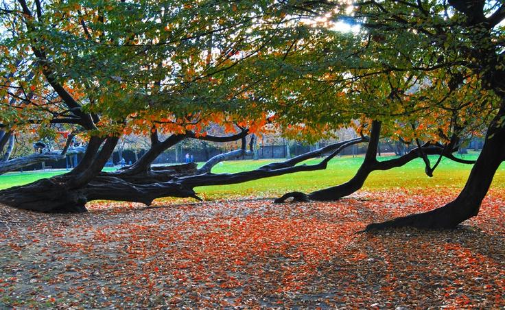 Ferrera's Park in autum. Parque de Ferrera en otoño, Avilés (Spain)