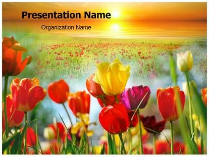 Best PowerPoint Slides Images On Pinterest Nature Plants And - Best of flower powerpoint background concept