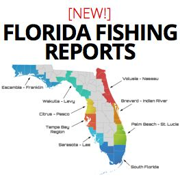 188 best images about saltwater on pinterest fishing for Florida saltwater fishing report