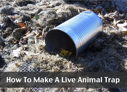 how to build a live trap for skunks