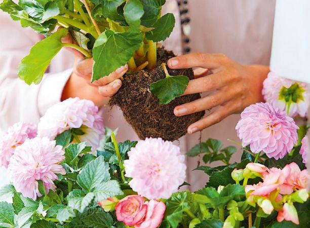 Хотите, чтобы в следующем году у вас был красивый сад и отличный урожай? Позаботьтесь о планировке сада уже сейчас.        ПЛАНИРОВКА САДА ВЫБЕРИТЕ МЕСТО ДЛЯ НОВОЙ КЛУМБЫ От места будет зависеть ее …