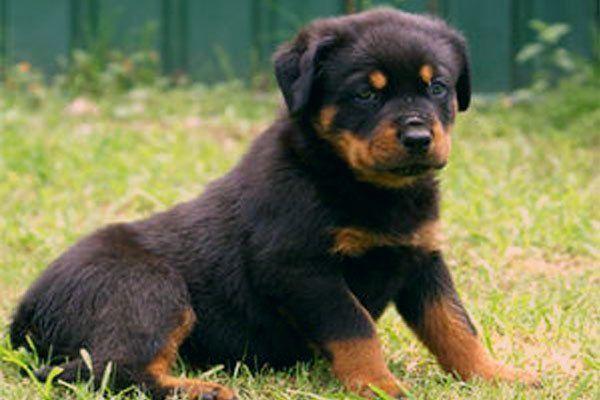 Puppies For Sale Free Puppies For Sale Free Puppies Puppies