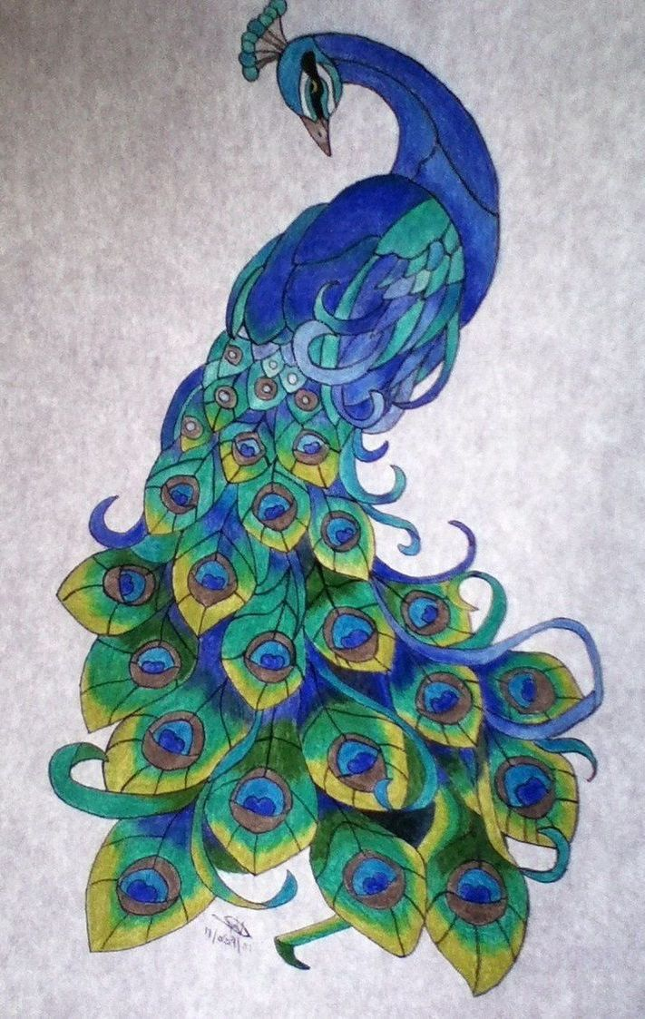 Peacock Drawing Color At Getdrawings Com Free For Personal Peacock Drawing Peacock Sketch Peacock Art