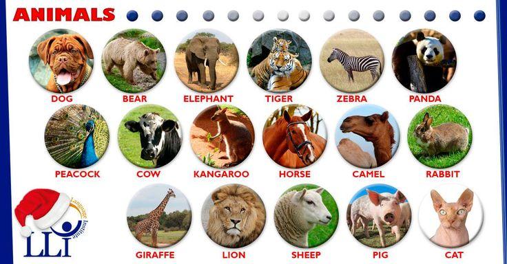 Animals #Students #Languages #Institute #Langdons #English #Practice #Fun #Like #Learning #GenteLangdons #TrinidadAndTobago #Ingles #Trinidad #LearnEnglish #SpeakEnglish
