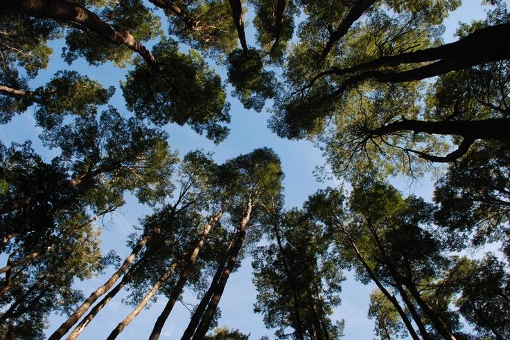 Bosques de Coihue, Ruta Kawellu-Co