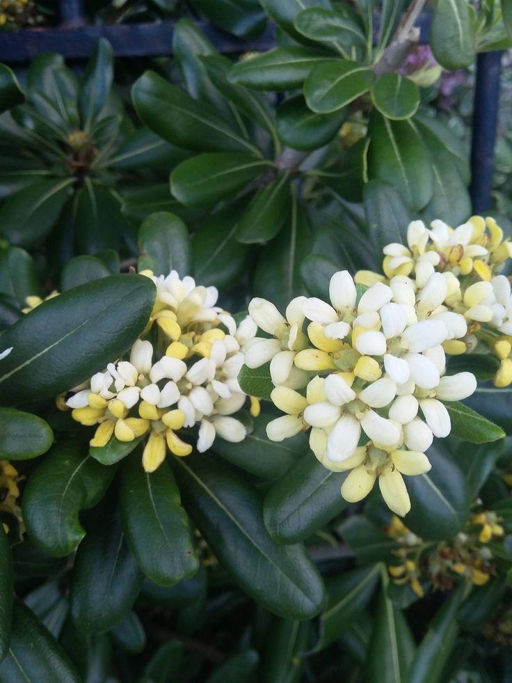 17 Best Ideas About Charleston Gardens On Pinterest