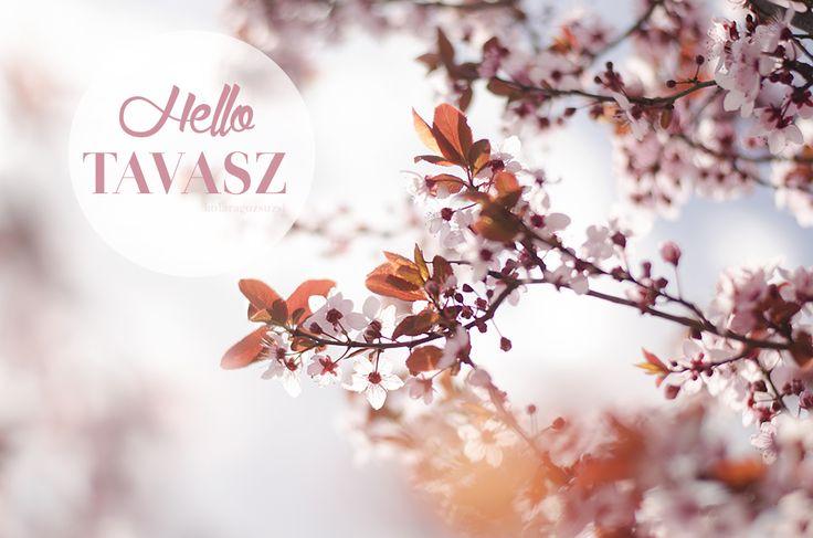 HELLO SPRING! by kofaragozsuzsiphotos  www.facebook.com/kofaragozsuzsiphotos