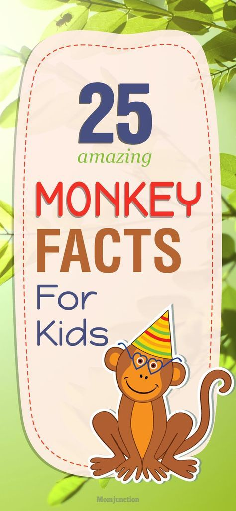 25 Fun Facts And #Information About Monkey For #Kids : Are you searching some fun facts about monkeys for kids? Yes, then look no further! Here, we've discussed 25 amazing monkey facts for kids. Scroll down now!