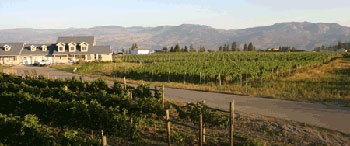 Kalala Organic Estate Winery - vineyard views in West Kelowna | Westside Wine Trail