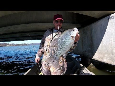 The 25 best crappie fishing ideas on pinterest bass for Crappie fishing secrets