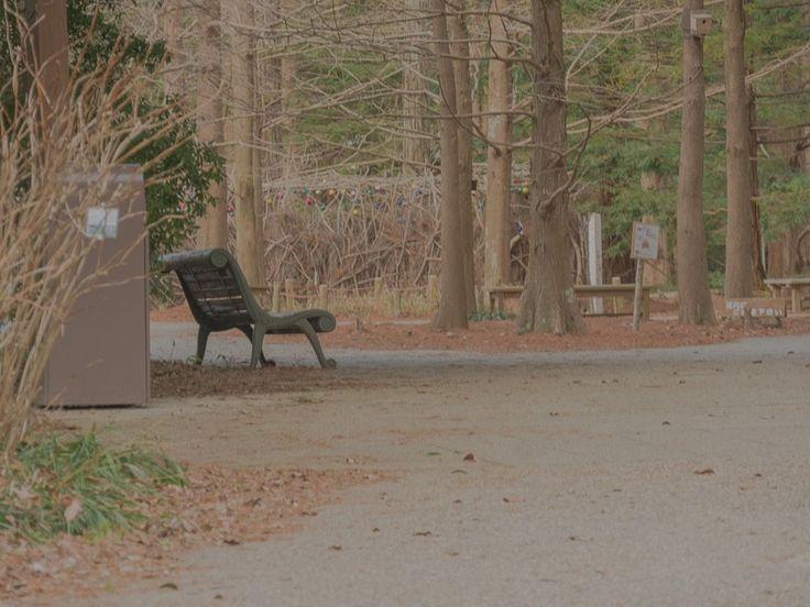 Bench 神戸市立森林植物園