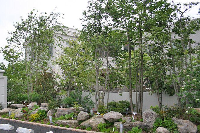 ロックガーデンと雑木風植栽 ガーデニング