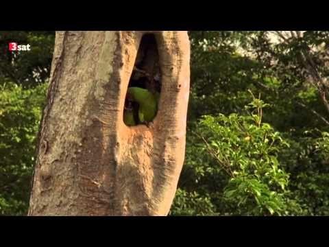 Almendro - Baum des Lebens Doku (2003) - YouTube